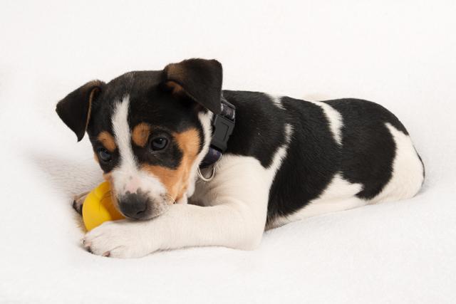 fotoshoot pup